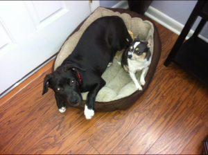 Two Canine Members of the Epoxy.com Office Staff.